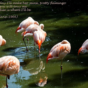 Some Sweet Day by Andrew Robinson - Typography Captioned Photos ( flamingo, love, postcard, valentine's day )