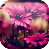 Pink Flowers Live Wallpaper