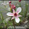 Unknown Water Flower
