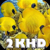 Quad HD 2k animals puzzle