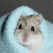 Complete Guide To Hamster Care