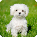 Cute Dog Live Wallpaper icon