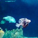 Aquarium Live Wallpaper 3 Free icon