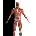 Anatomy Reference icon