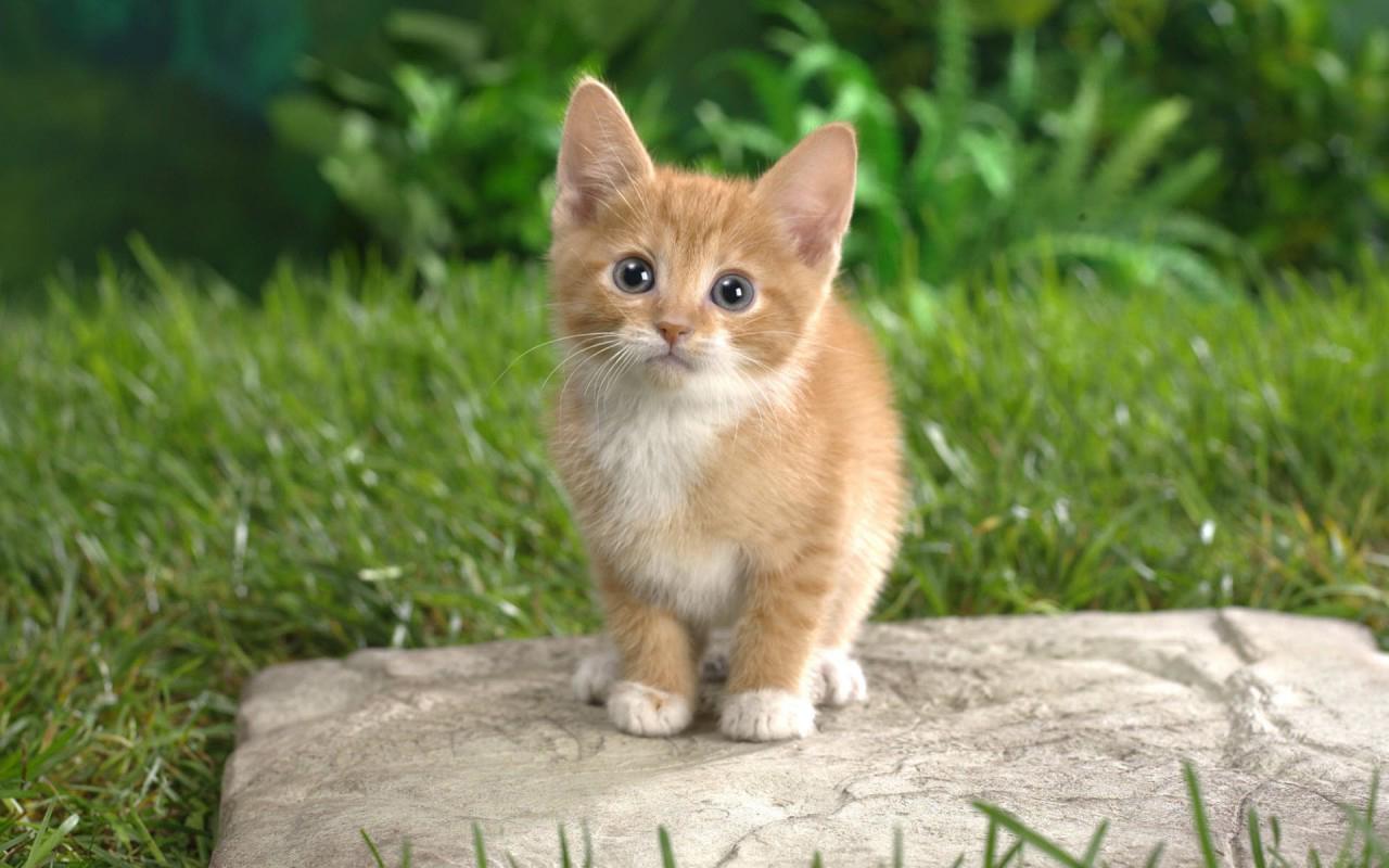 Google themes kittens - Cat Kittens Live Wallpaper Screenshot