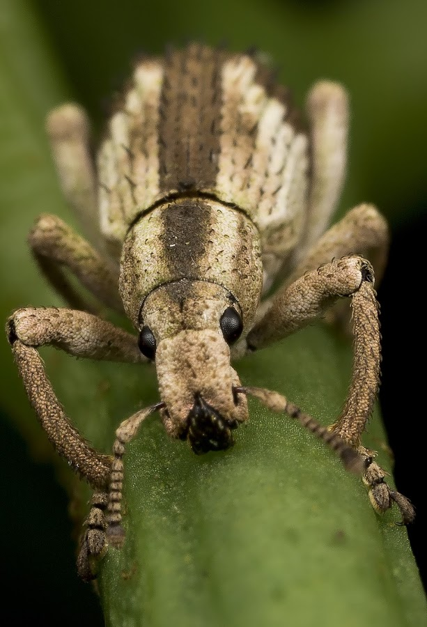 by Chris Chia How - Animals Insects & Spiders