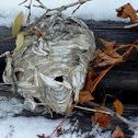 Ball Hornet Nest