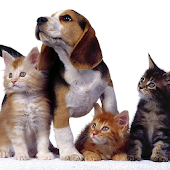 Puppy and Kitten Jigsaw Puzzle