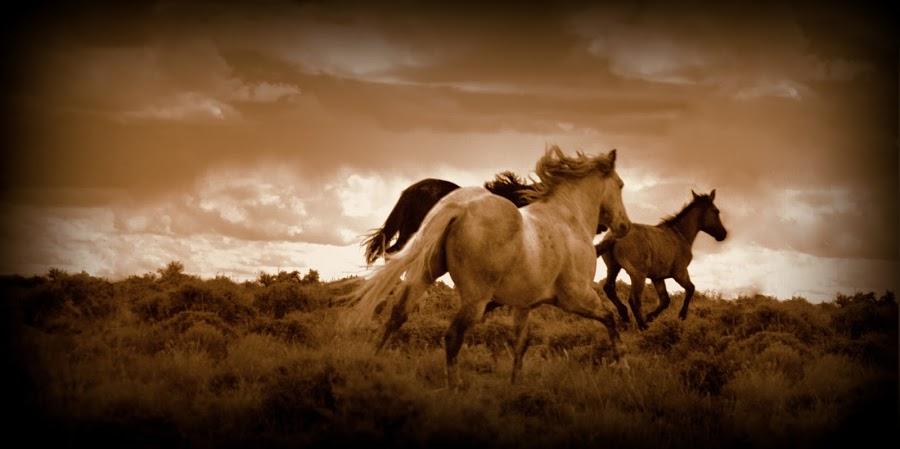 Thunder Road by Ryan Smith - Animals Horses