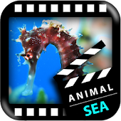 Best Sea Animals