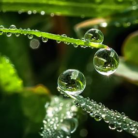 2 and 1 by Kawan Santoso - Nature Up Close Natural Waterdrops