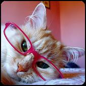 Meow Reader