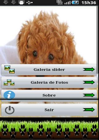 Cachorros Poodle