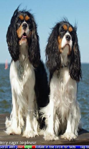 Top 50 Dog Breeds 2 FREE