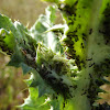 Aphid Farming Ants