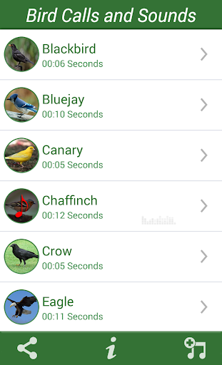 Bird Calls and Sounds