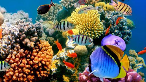 Undersea Aquarium world