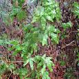 Distinctly Carolina Plants
