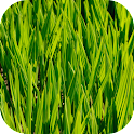 Free Green HD Wallpapers icon