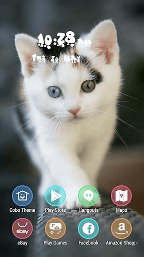 你好可愛Kitty的可愛的貓主題