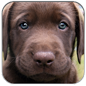 Puppies Pictures Wallpaper App