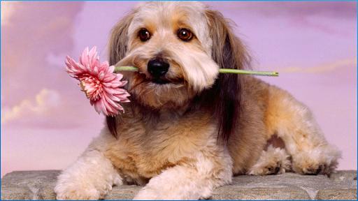 漂亮的狗壁紙