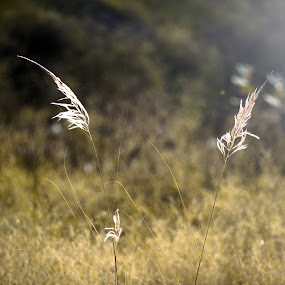 TheNature by Zeeshan Khan - Nature Up Close Leaves & Grasses (  )