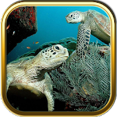 Ocean Turtles Puzzle Games