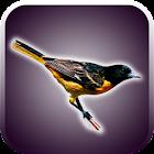 sonidos de pájaros icon