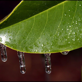 by Connie Payne - Nature Up Close Natural Waterdrops