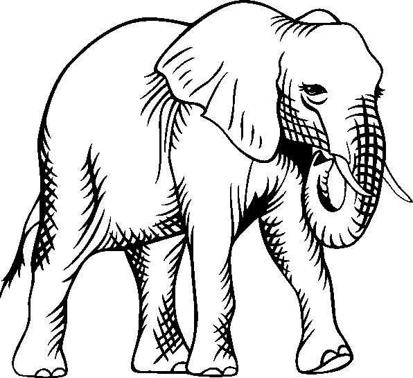 Imagenes para colorear animales en peligro de extincion ...