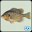 Name That Fish icon