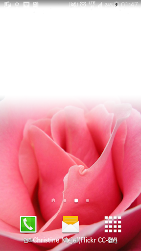 touching pink rose wallpaper