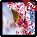 Sakura Wallpaper icon