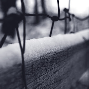 Macro snow by Lazar Manojlovic - Black & White Macro ( macro art, macro, cold, macro photography, black and white, snow )