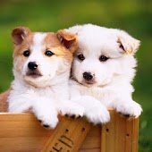 Cute Puppys Wallpaper