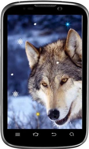 Wolves Family live wallpaper