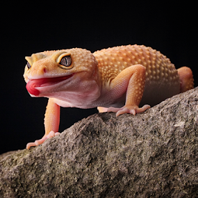 ... by Sugeng Sutanto - Animals Reptiles
