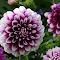 Wisley Gardens 28 09 2014 069.JPG