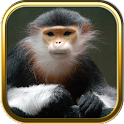 Monkey Puzzles icon