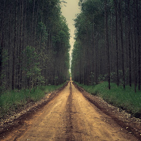 ... by Matheus Dalmazzo - Landscapes Forests ( tree, way, road )