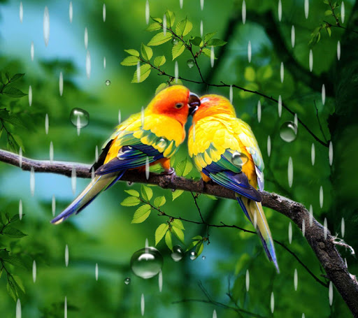 Rainy Bird Live Wallpaper