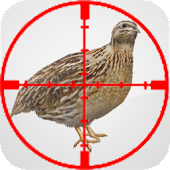 Quail Educational Call Hunt