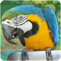 Bird Sounds - Free songs icon