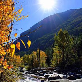 Warm fall sun  by Debbie Sodeman-Roelle - Landscapes Mountains & Hills ( water, washington, entiat, fall, trees, landscape, sun, river,  )
