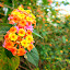 Superb Flowers by Vinayak Shinde - Novices Only Flowers & Plants ( vin007, plants, flowers, bokeh, flower,  )