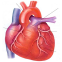 Luck Heart Surgery icon
