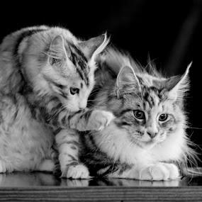 hey dude! by Darko Kovac - Animals - Cats Portraits