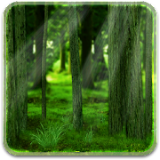 RealDepth Forest LWP