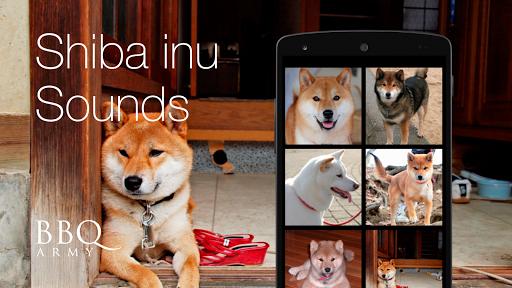 Shiba Inu Sounds Shiba Dog